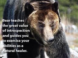 bearmedicine